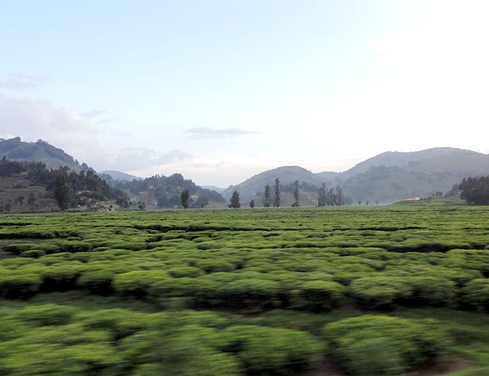 Rwanda, jarðhitanýting