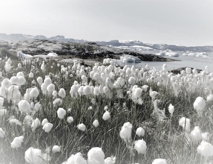 Jóla- og nýjárskveðjur frá VSÓ Ráðgjöf